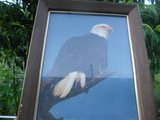 Picture Bail Eagle 5x8 frame in Dickson, Tennessee